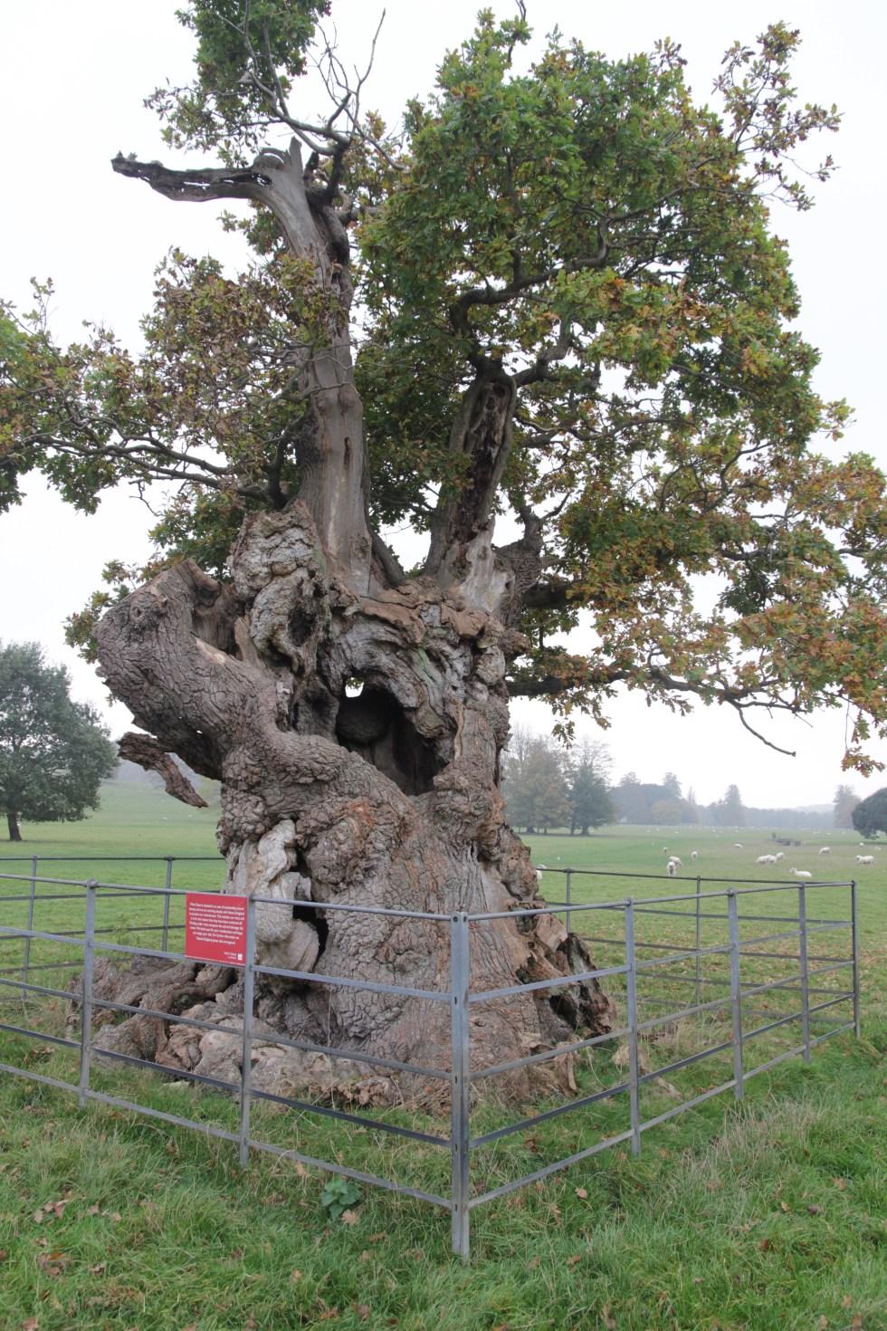 img 8634 National tree week celebrating trees