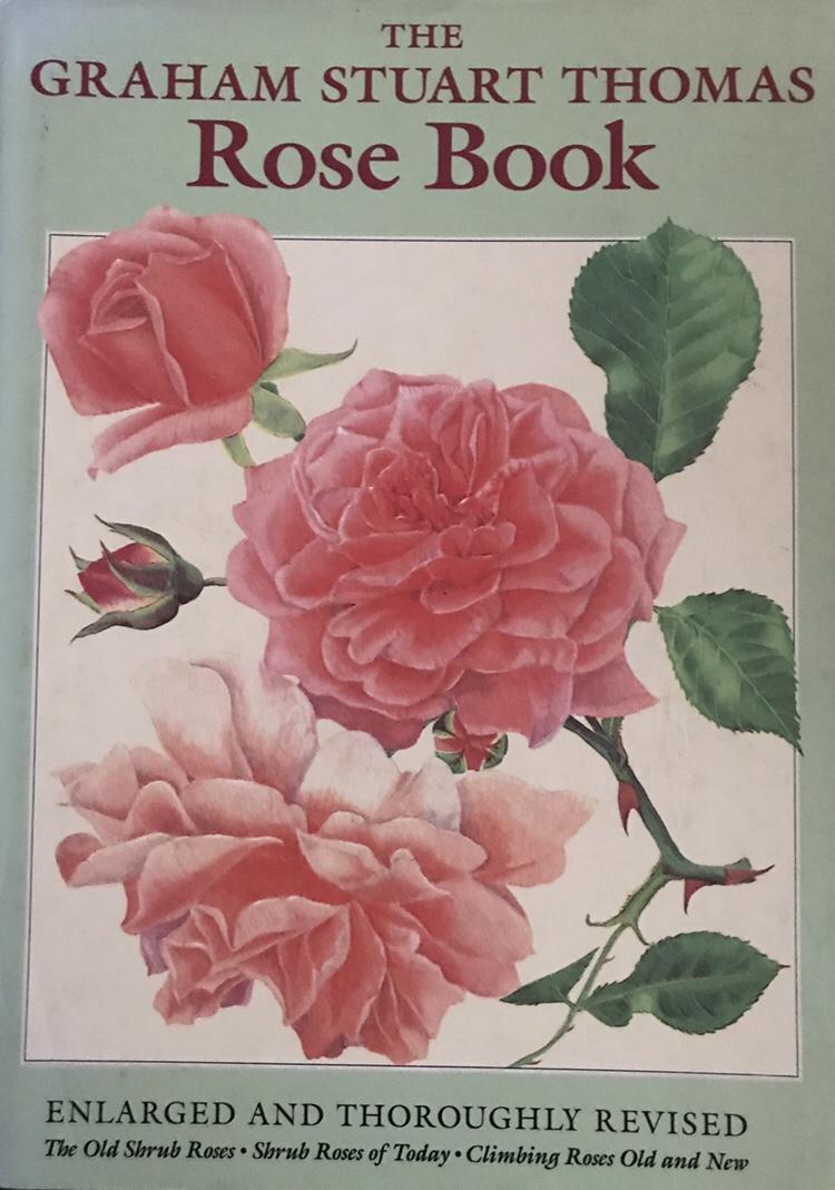 img 2229 World book day!