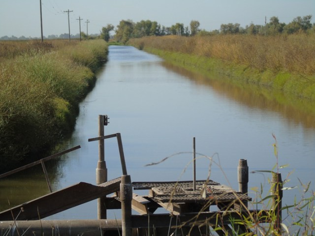 Picturesque canals convey water from one area of the Bypass to another. You may see beaver.