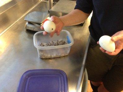 Penguin Eggs