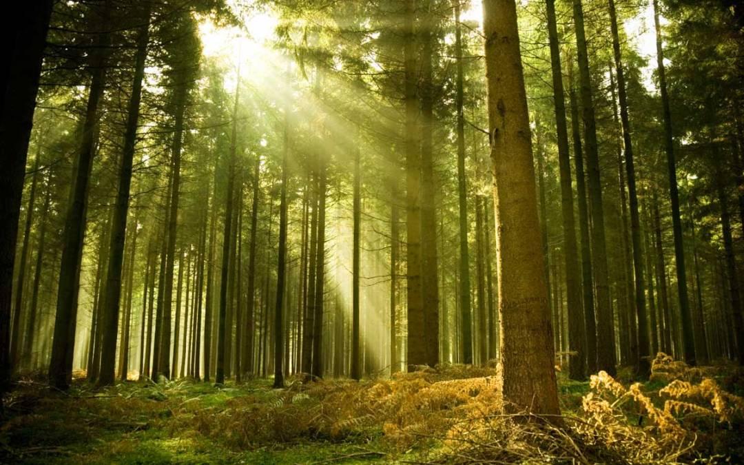 Clackamas Hardwood Forest Project