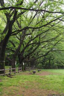 Akatsuka Jōshi Kōen (赤塚城址公園)
