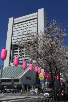 Nakano Dori Sakura Matsuri (中野通り桜祭り) / Nakano Sun Plaza