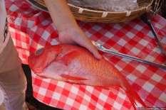 Manazuru - Orange Floral Farm Barbecue