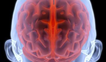 3D rendering of a brain inside a human skull