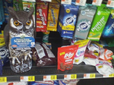 Misplaced at Walmart: Owl and Candy