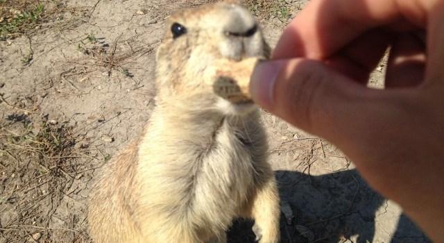 Can I Feed My Dog Prairie Dog