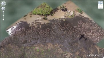 "Des hippopotames qui se baignent (6 ° 53'53.00 ""S 31 ° 11'15.40″ E) Katavi National Park, Tanzanie"