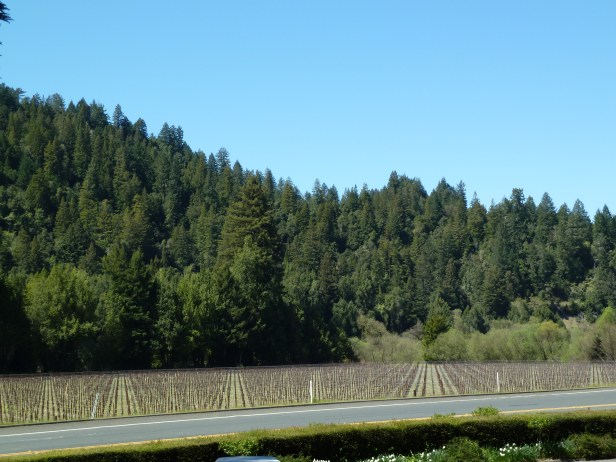Winter along River Road at Korbel Vineyards