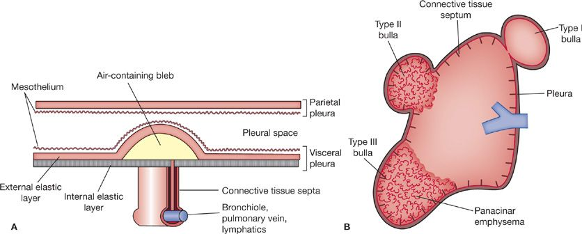 Layers Blood Vessels