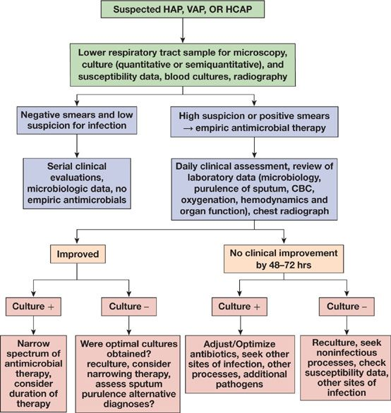Approach to the Patient with Pulmonary Infection | Thoracic Key