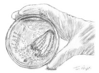 culture bacteriologique