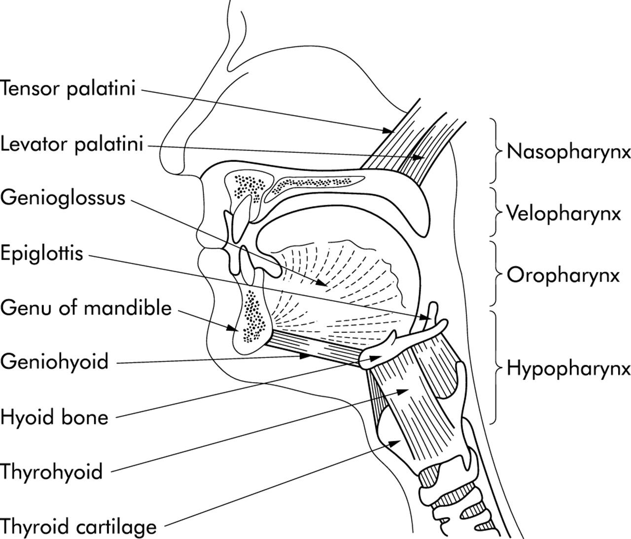 Sleep 2 Pathophysiology Of Obstructive Sleep Apnoea