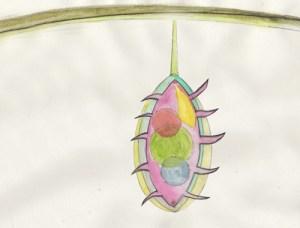 Desire Fruit 1