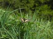 Bayrischer Schmetterling