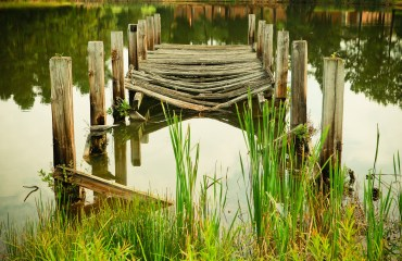 bridge-lake-amazon-water-green