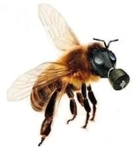 abelhas-x-veneno