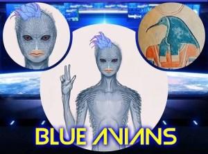 blue-avians