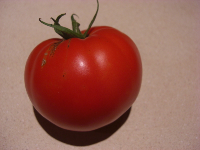 It's a tomato - we're so proud!