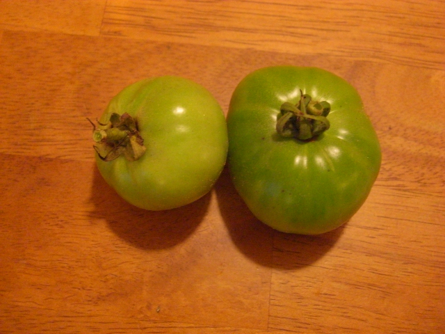 The last two tiny tomatoes from our garden!