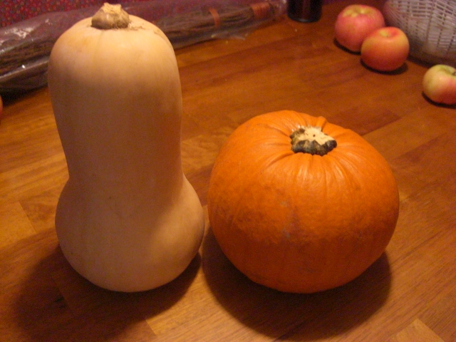 Squash and Pumpkin hang out on the table