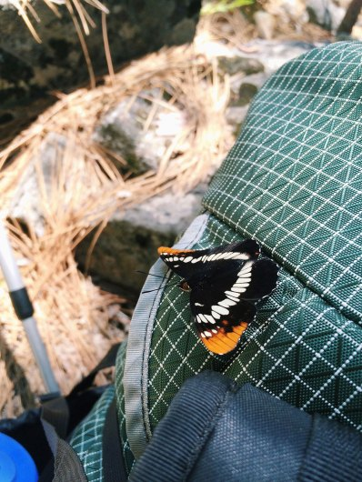 Butterfly on my pack!