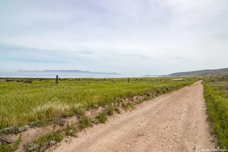 Coastal Road, Santa Rosa Island