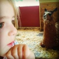 Llama Llama, Stinky Thinker