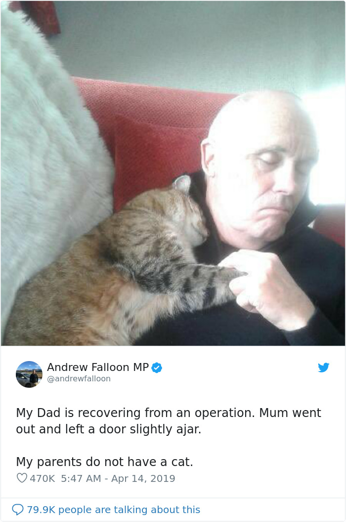 sleeping man recovering from surgery wakes up to find stranger cat cuddling him
