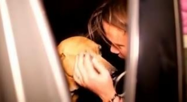 woman buys the whole shelter because she couldn't decide which dog to adopt