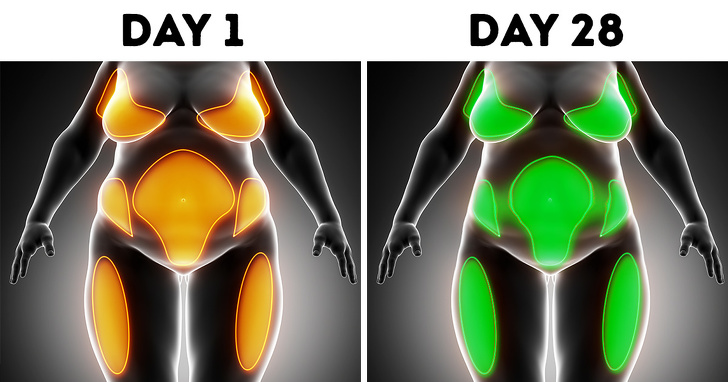 your body after 28 days of no alcohol