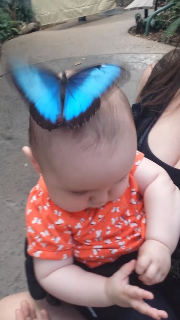 butterfly lands on baby's head and opens its wings to form dazzling hat