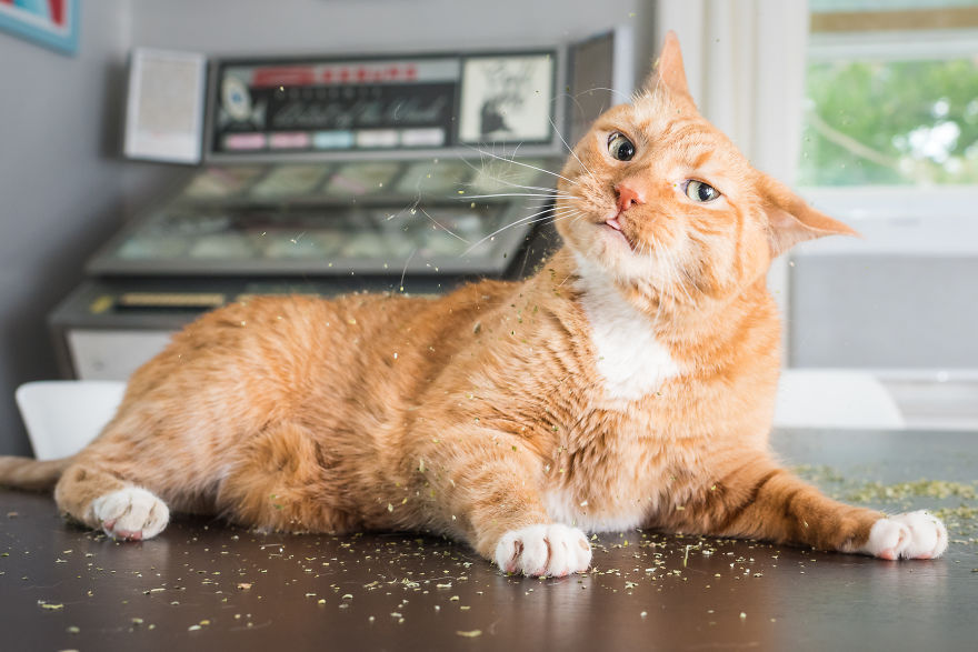 creative photographer shares photos of cats high on catnip, and the results are so much fun