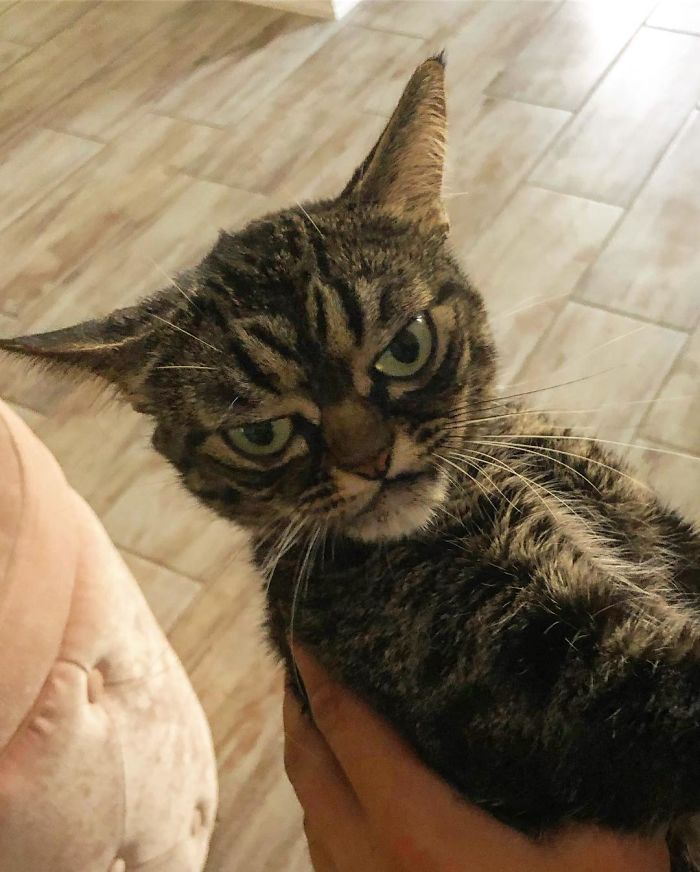 meet the new grumpy cat called kitzia who's even angrier than her late predecessor