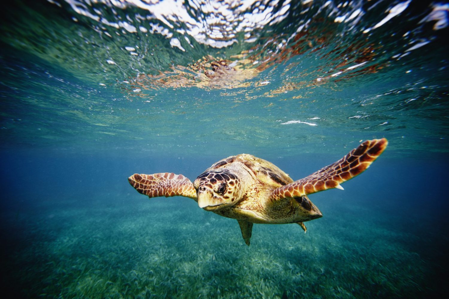 with humans stuck indoors, endangered hawksbill turtles hatch on deserted beaches in brazil