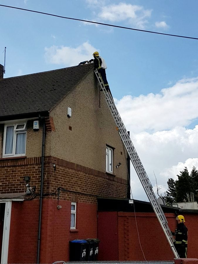 parrot stuck on roof tells fire crew to 'f*** off' when they try to rescue her