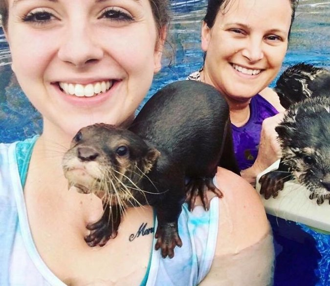 this animal preserve lets guests swim with adorable tiny otters