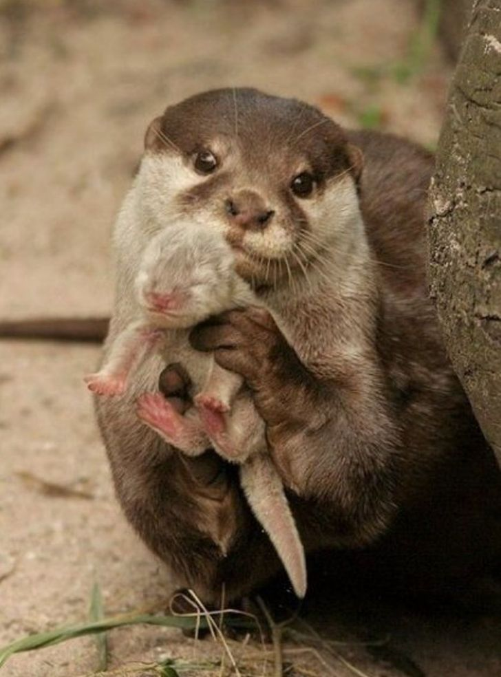 20 animal facts that made us go awww