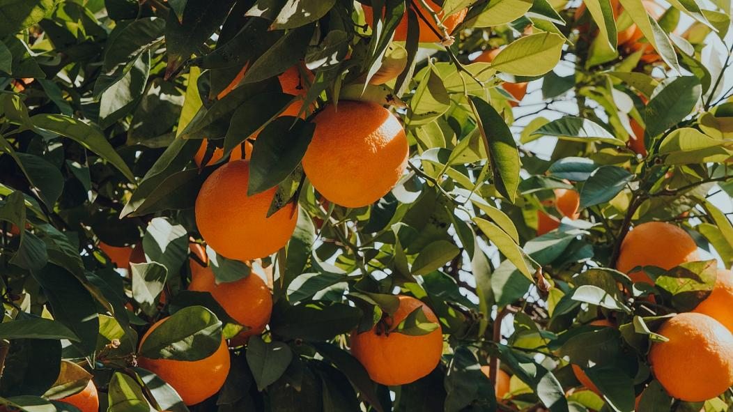spanish city is squeezing green electricity from leftover oranges