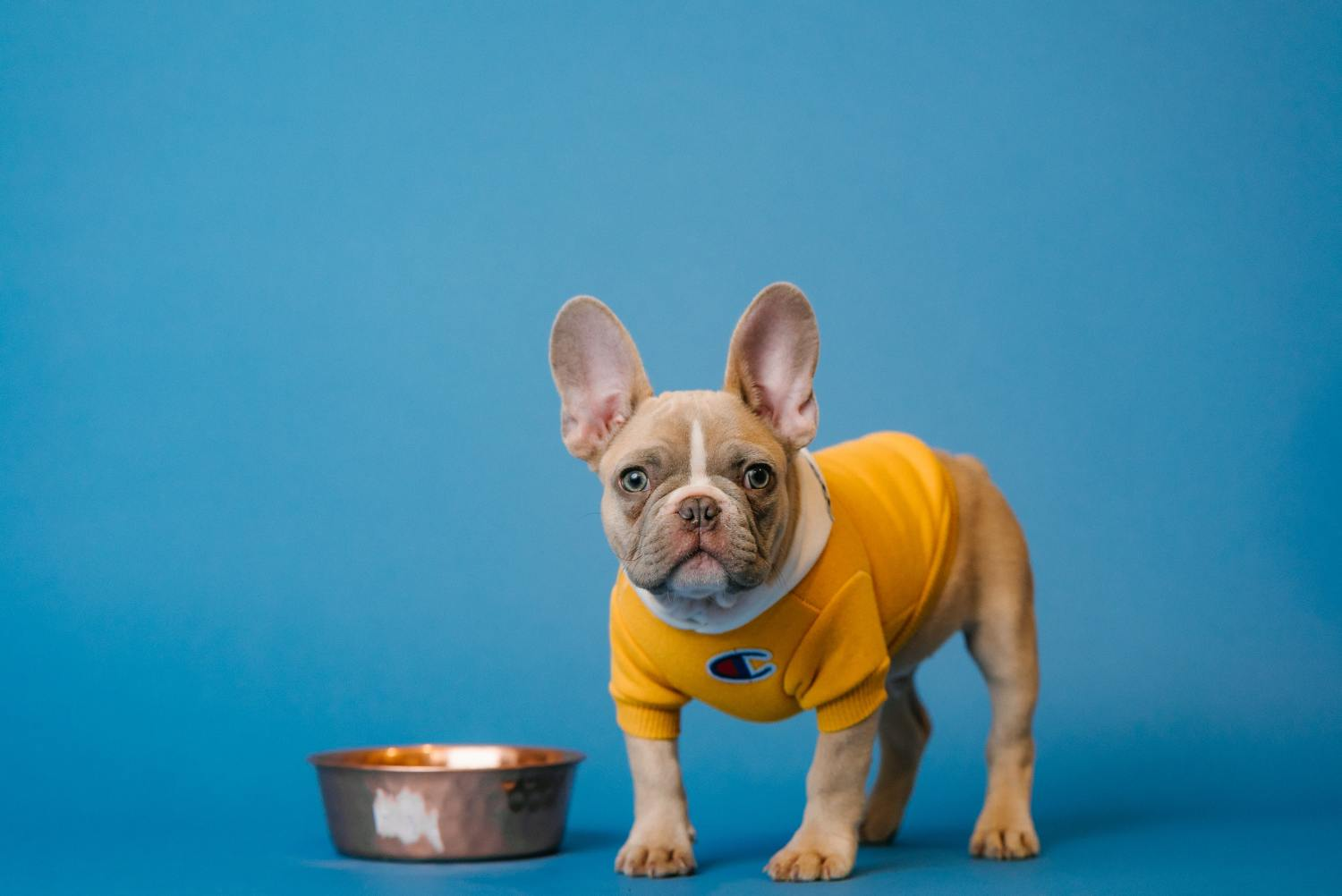 can dogs eat carrots and 15 other food dilemmas