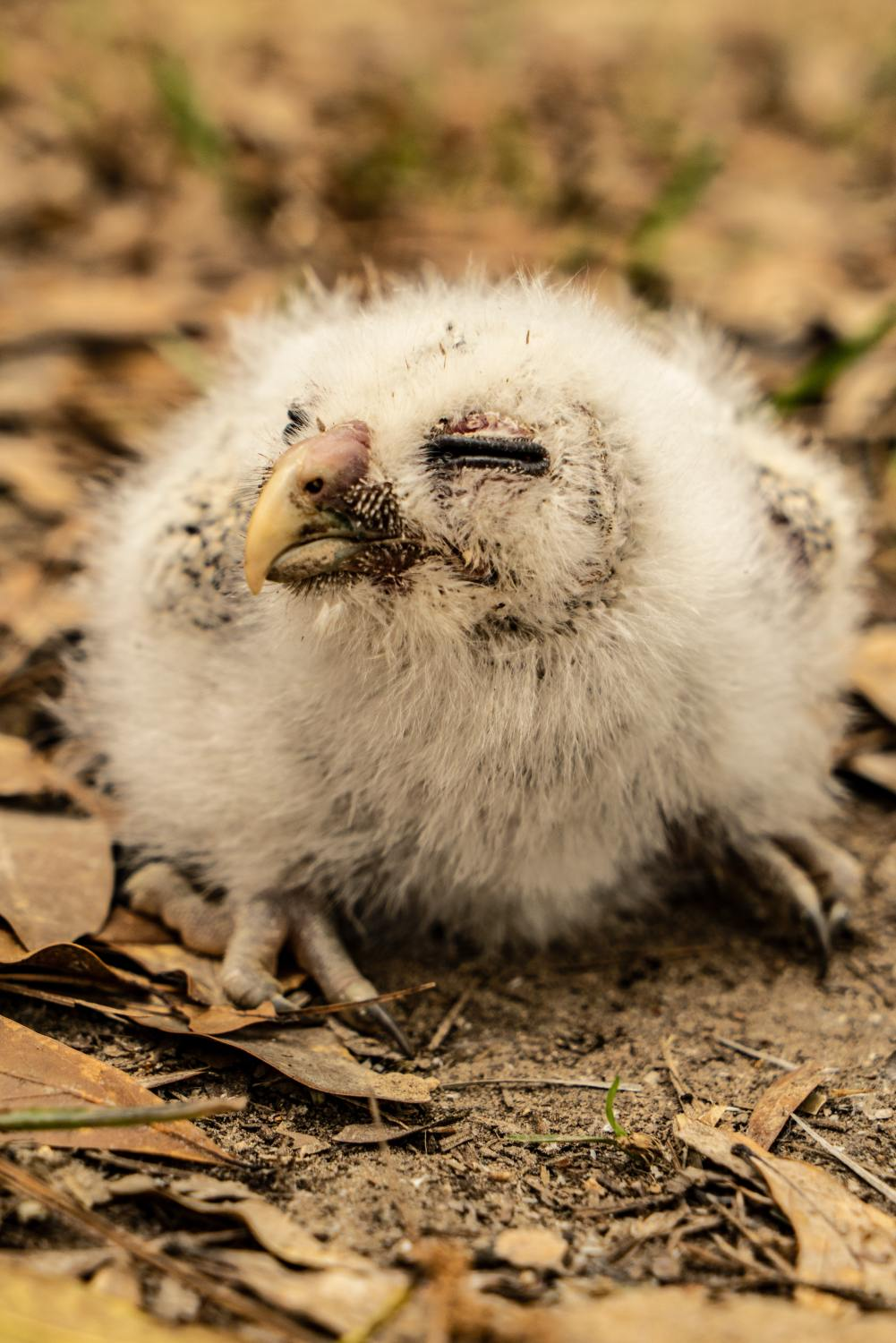 10 facts about baby owls you never knew before