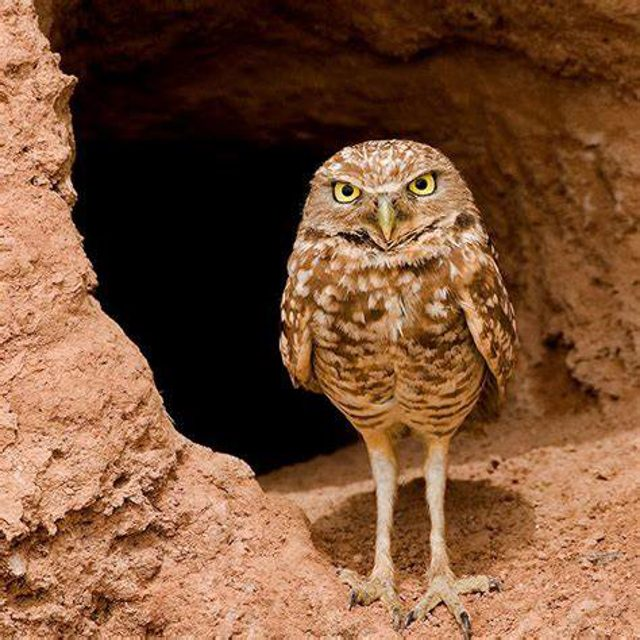 Owl Legs Are Surprisingly Long, And It's The Cutest Thing Ever