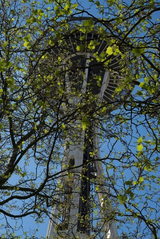 spaceNeedleTree_1886