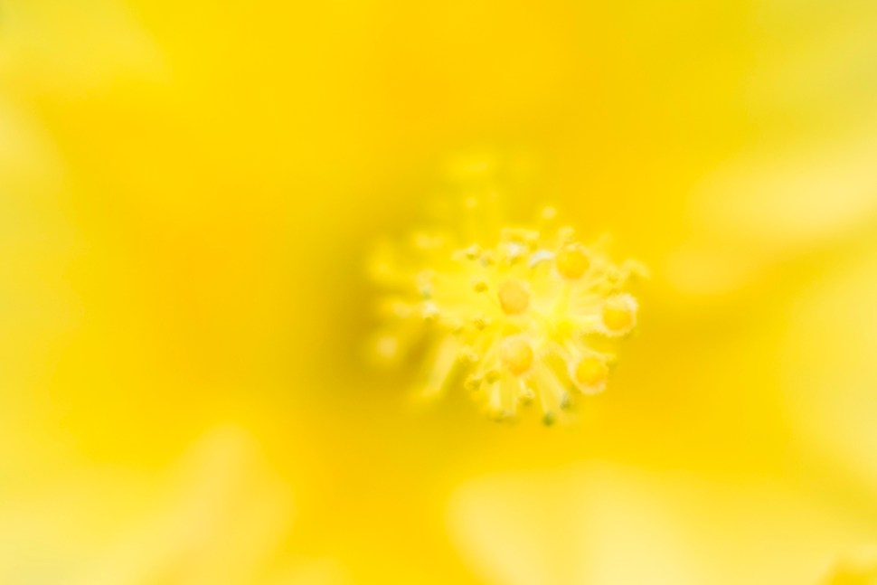 yellow_DSCF4584