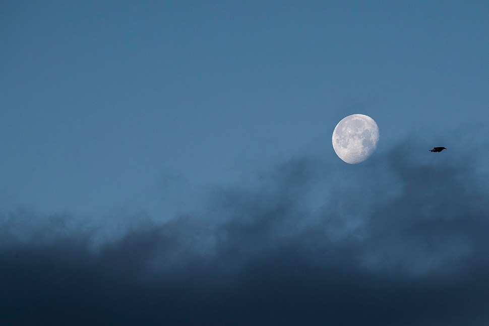 moons_34-37_bird