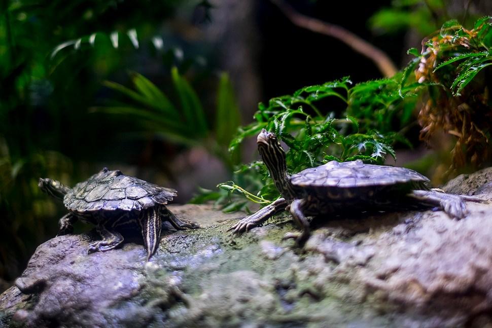turtles_DSCF9804