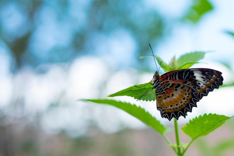 butterfly_DSCF3596
