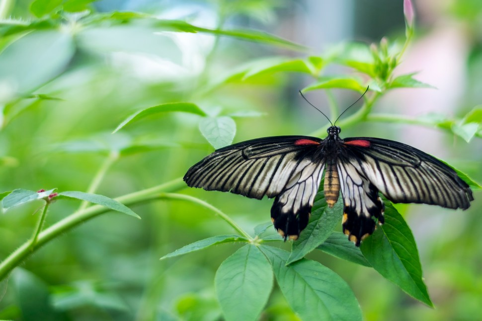 butterfly_DSCF3601