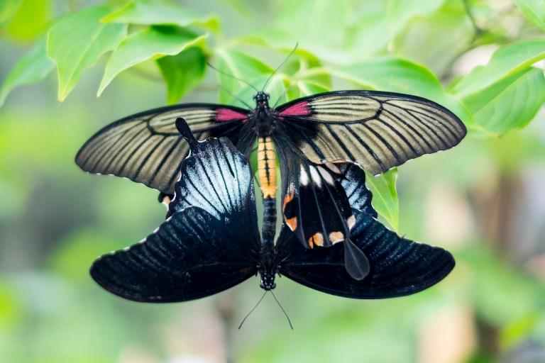 butterfly_DSCF3604