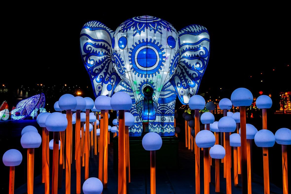 elephantenoki_DSF2484.jpg